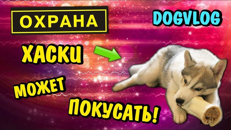 DOGVLOG: СИНДИ МОЖЕТ ПОКУСАТЬ! Говорящая собака