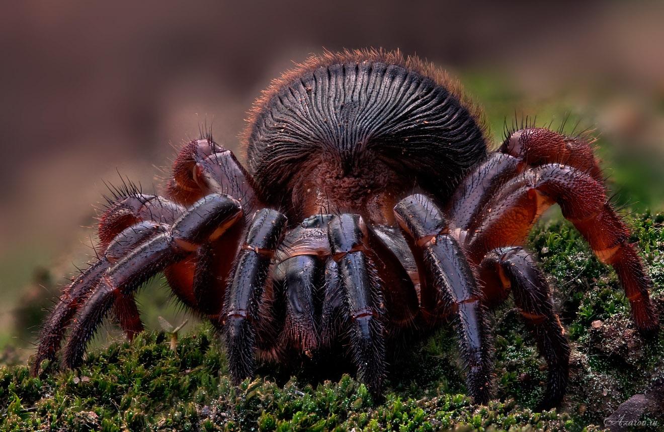 интересные фото пауков наших
