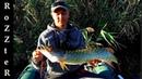 Ловля крупной щуки на малой реке. TsuYoki FLIRT 128SP Jackall Mag Squad 128SP