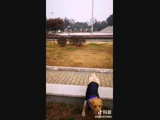 WAIT WAIT WAIT! WHY CAN'T STOP. DOG PET