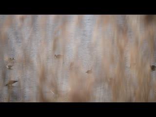 Эффект прибрежной травы с порывами ветра 14 м/с