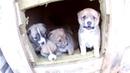 Малявочки щенятки *** милая семейка