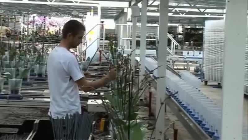 Orchidee van geboorte tot volwassenheid
