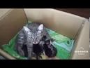 Мини-фильм добрые и злые . Защищайте кошек Видео Олеси