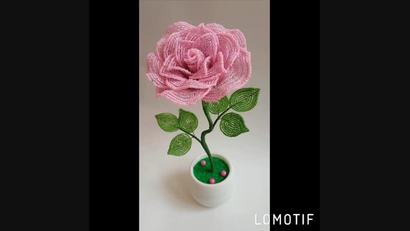 Розовая роза 🌹