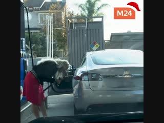 Девушка пытается заправить электрокар Тesla бензином