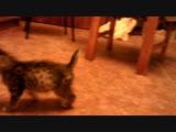 Тесса. Уже НЕ парализованный котёнок. День седьмой. Мы это сделали!!!