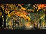 Мой сад осенью. Часть 2. My garden tour in automn.