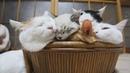 приколы про котов кошек котят 2019