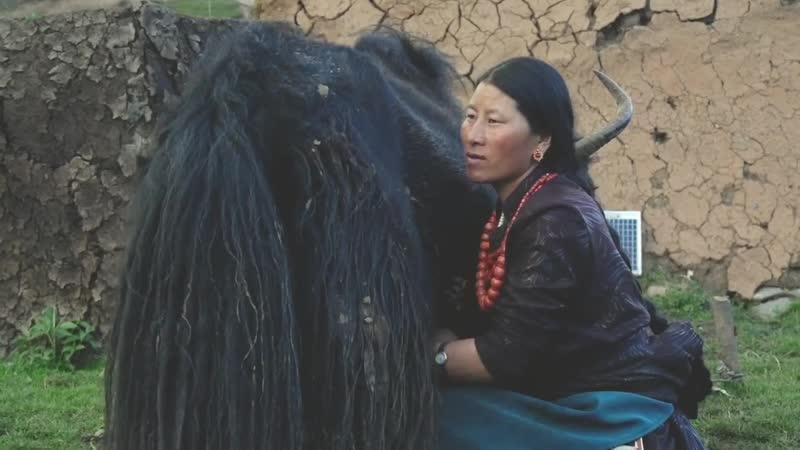 Тибетский сыр