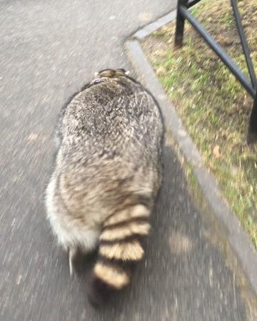 """Енот Нойер / Raccoon Neuer on Instagram: """"Игра с видом от третьего лица Енот: путь домой / RPG Third person view, Raccoon: The way back енотнойер ..."""