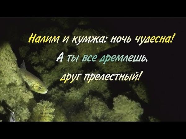 Озёрный подводный мир Осень Lake underwater world Autumn