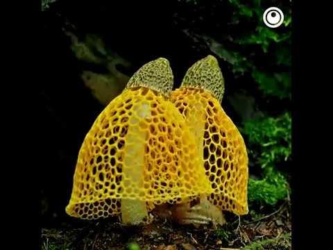 Mushroom Bloom Timelapse Set to Trippy Music