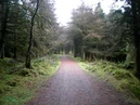 Ballyboley forest 01.03.09 023.AVI