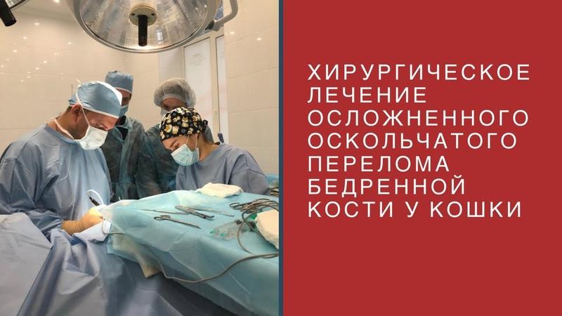 Хирургическое лечение осложненного оскольчатого перелома бедренной кости у кошки