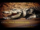 Nat Geo Wild Африка Убийцы с фантазией.Смертельная переправа (1080р)
