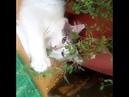 Ты сегодня мне принёс не букет из пышных роз, не тюльпаны и не лилии...