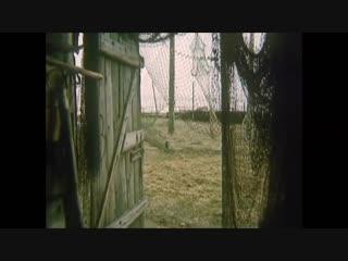 Чёрный пёс (Остров сокровищ, 1982)