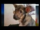 Жительницу Барнаула обвиняют в жестоком обращении с животными