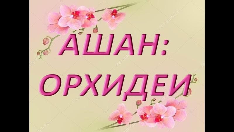 АШАН ОРХИДЕИ,23.02.2019,ТЦ Космопорт,г.Самара