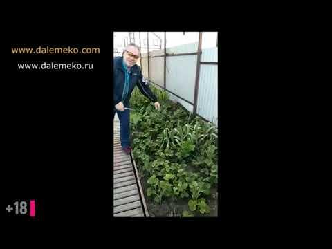 Как действует ЭмЭко Хелат с Кумицким Олегом Петровичем.