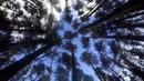 звуки в лесу MTB YouTube Subscribe RustyRyder
