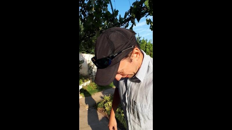 Евгений давит виноград в Гостевом доме Гринвич mp4