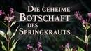 Die geheime Botschaft des Springkrauts | 19.05.2019 | 14311