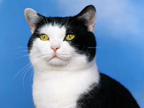 Обязанности кота по дому 1. Кот должен защищать человека от комнатных растений. 2. Кот постоянно должен поддерживать человека в форме, заставляя его непрестанно двигаться по квартире,