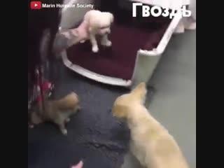 Как ожила собака_ поняла, что ей вернули ее щенят