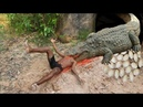 Primitive Technology: Man Make Crocodile Trap Using Deep Hole And Rescue Crocodile Back to The Wild