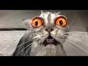 Я РЖАЛ ПОЛ ЧАСА. Смешные Коты и Собаки. ПРИКОЛЫ С ЖИВОТНЫМИ. Cute Cats 120