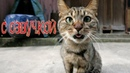 Приколы с котами – СМЕШНАЯ ОЗВУЧКА ЖИВОТНЫХ– Коты и кошки 2018 - DOMI SHOW