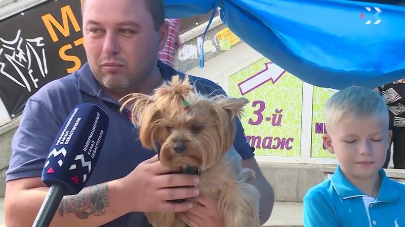 В Севастополе домашних животных бесплатно прививали от бешенства