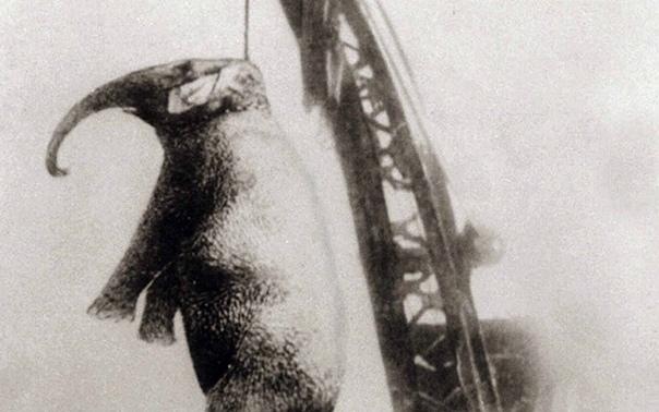 Эту пятитонную слониху прозвали «Убийцей Мэри», она была повешена за свои преступления в 1916 году. Мэри выступала в цирке «Sparks World Famous», где убила дрессировщика Реда Элдриджа. Бывший бездомный Элдридж, которого только что наняли, решил прокатитьс