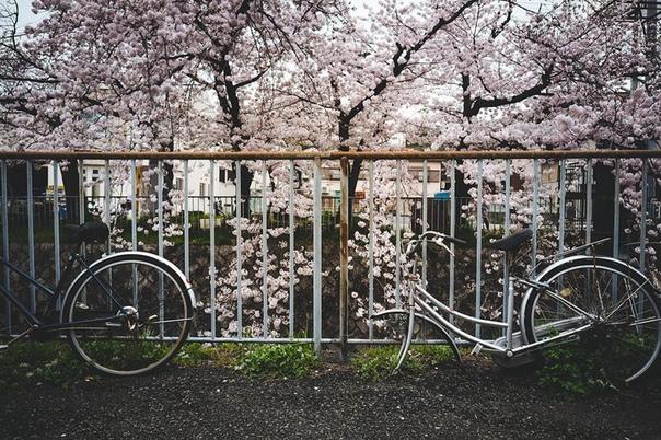 велосипеды, которые уже никуда не поедут выражение «изобретать велосипед» не вполне справедливо: этому не такому уж и простому изобретению всего 201 год (а если считать необходимыми атрибутами