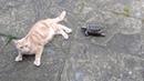 FAST TORTOISE HUNTS RELENTLESSLY ATTACKS CAT FROM GARDEN