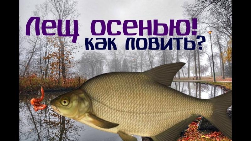 Как и где ловить леща осенью? Все секреты и хитрости ловли леща осенью!