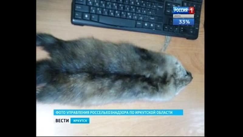 Фуру со шкурками соболя без документов задержали в Слюдянском районе