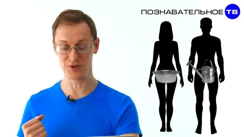 Что такое ШАЙКА-ЛЕЙКА (Познавательное ТВ, Артём Войтенков)