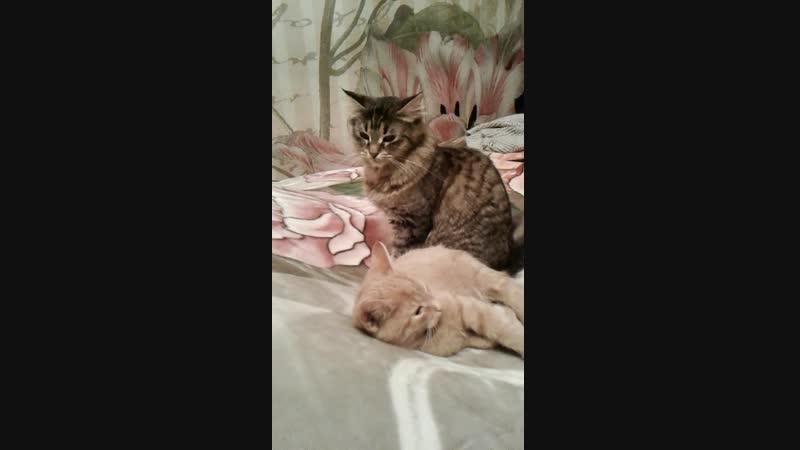 дочурка и сын 2