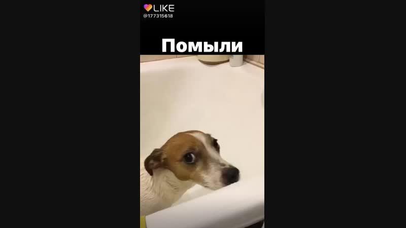 помыли