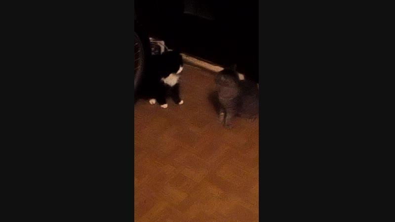 Митька Пи и и vs Тутик