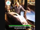 Самый дорогой тунец | АКУЛА