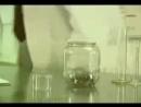 Блохи и банка Эксперимент