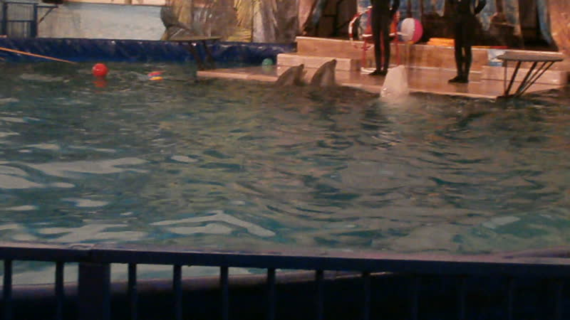 дельфинарий 2015.09.03