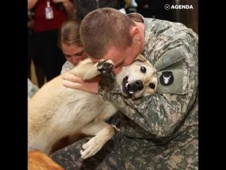 Самые любящие собаки в мире