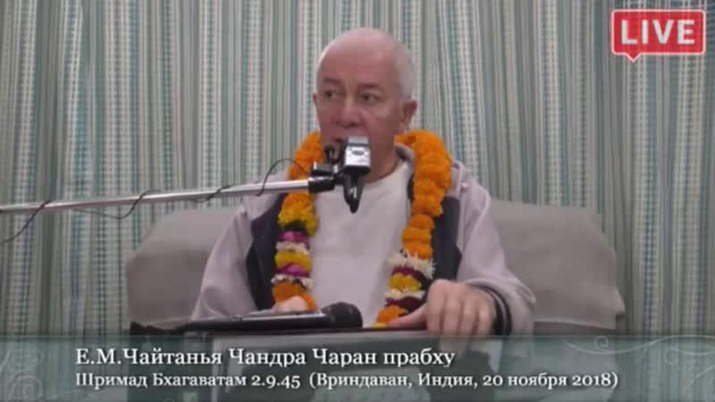 Дмитрий Толкачев live
