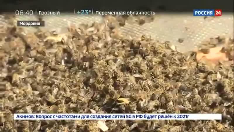 МЁДА НЕ БУДЕТ В РОССИИ ПЧЁЛ ОТРАВИЛИ 2019