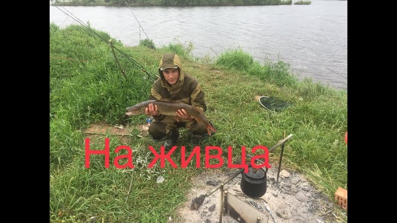 Рыболовное Путешествие 2018 ! Рыбалка на реке Волхов и Мста в Новгородской области ! Часть третья !